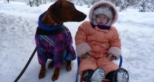 На Зимней Двориаде Липецкой области разыграны первые медали в гонках на собаках