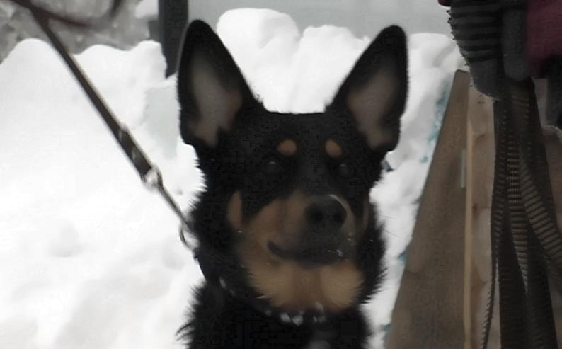Гонки на собачьих упряжках — впервые на Олимпиаде (ВИДЕО)